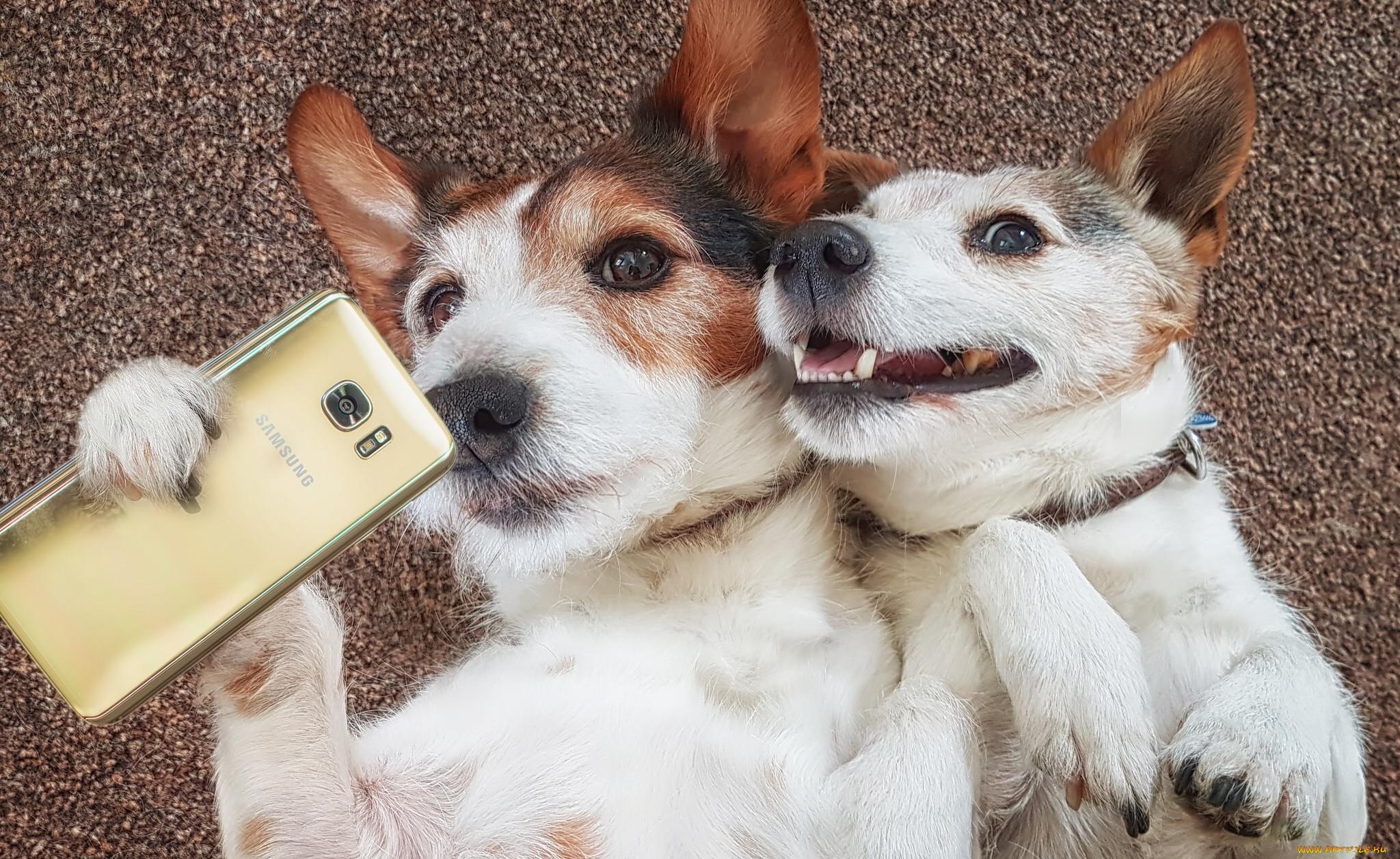 Картинки собак приколы
